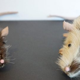 New Rats With Feet