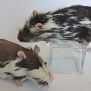 Rats with Feet